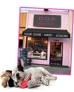 Dog_front_store